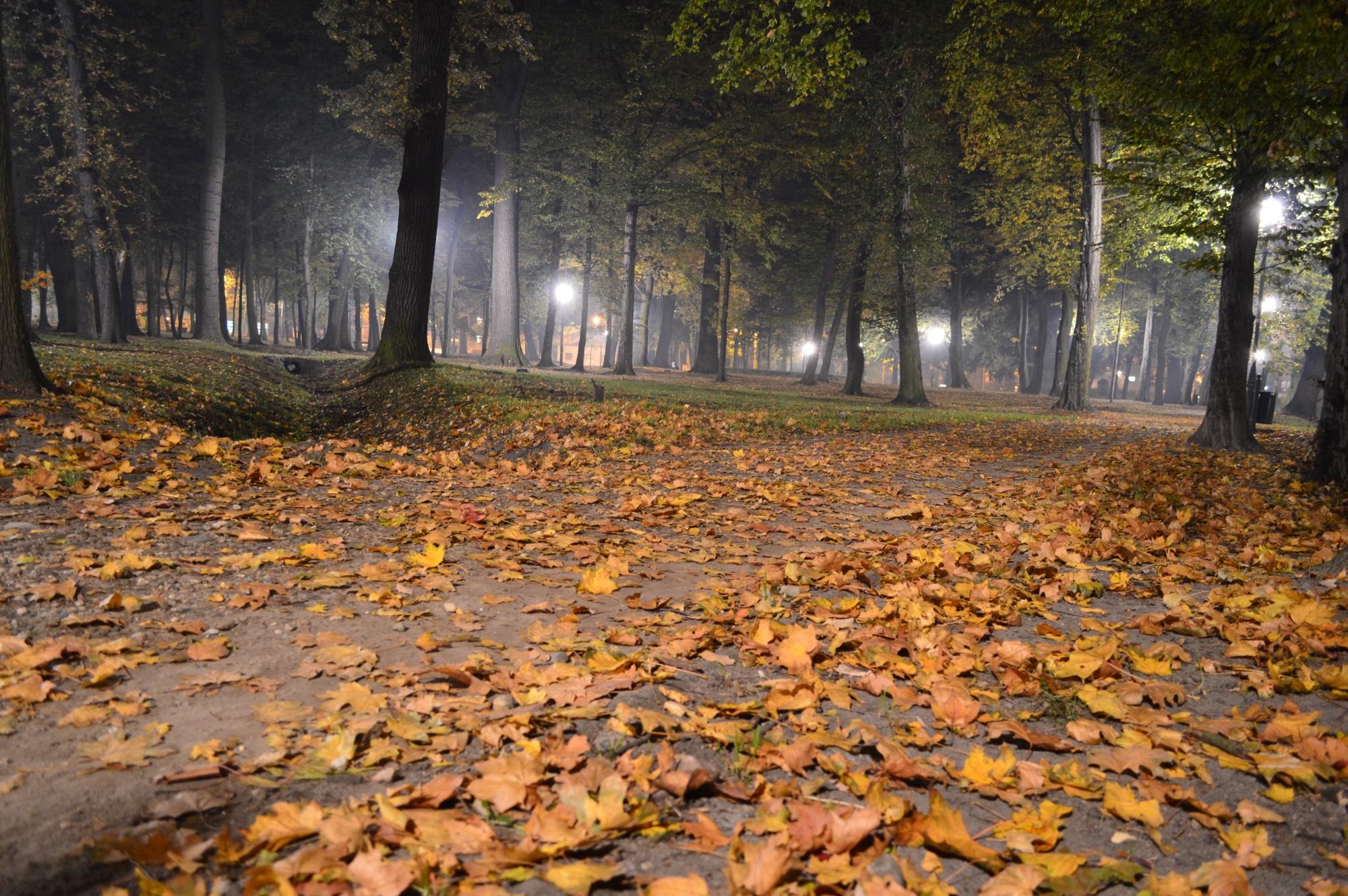 Herbstblätter im Stadtpark