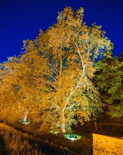Wysokie drzewo iluminowane od dołu